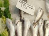 Бакальярос, рыба из отряда тресковых
