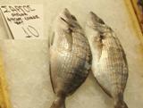 Саргос. Греческая рыба