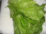 Салат марули (латук)