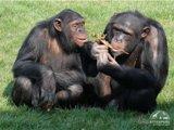 Приматы зоопарка Аттика